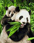 Schipper Pandab�ren Malen nach Zahlen