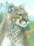 Malen nach Zahlen mit Buntstifte CPN-17 Puma