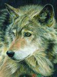 Malen nach Zahlen mit Buntstifte CPN-18 Wolf