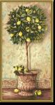 Malen nach Zahlen Citrus Limonum ( Zitronenb�umchen ) von Schipper