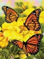 Malen nach Zahlen Monarch-Schmetterling PJS68