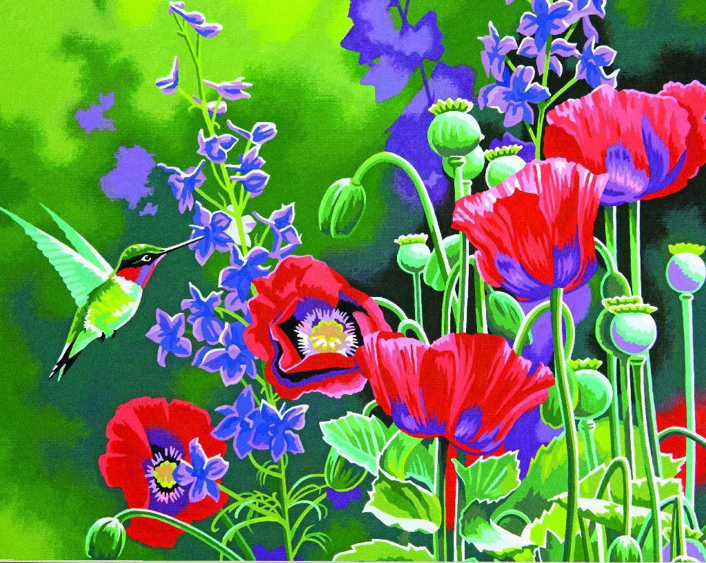 Kolibris Und Mohnblumen Malen Nach Zahlen Dimensions Hobbyshop