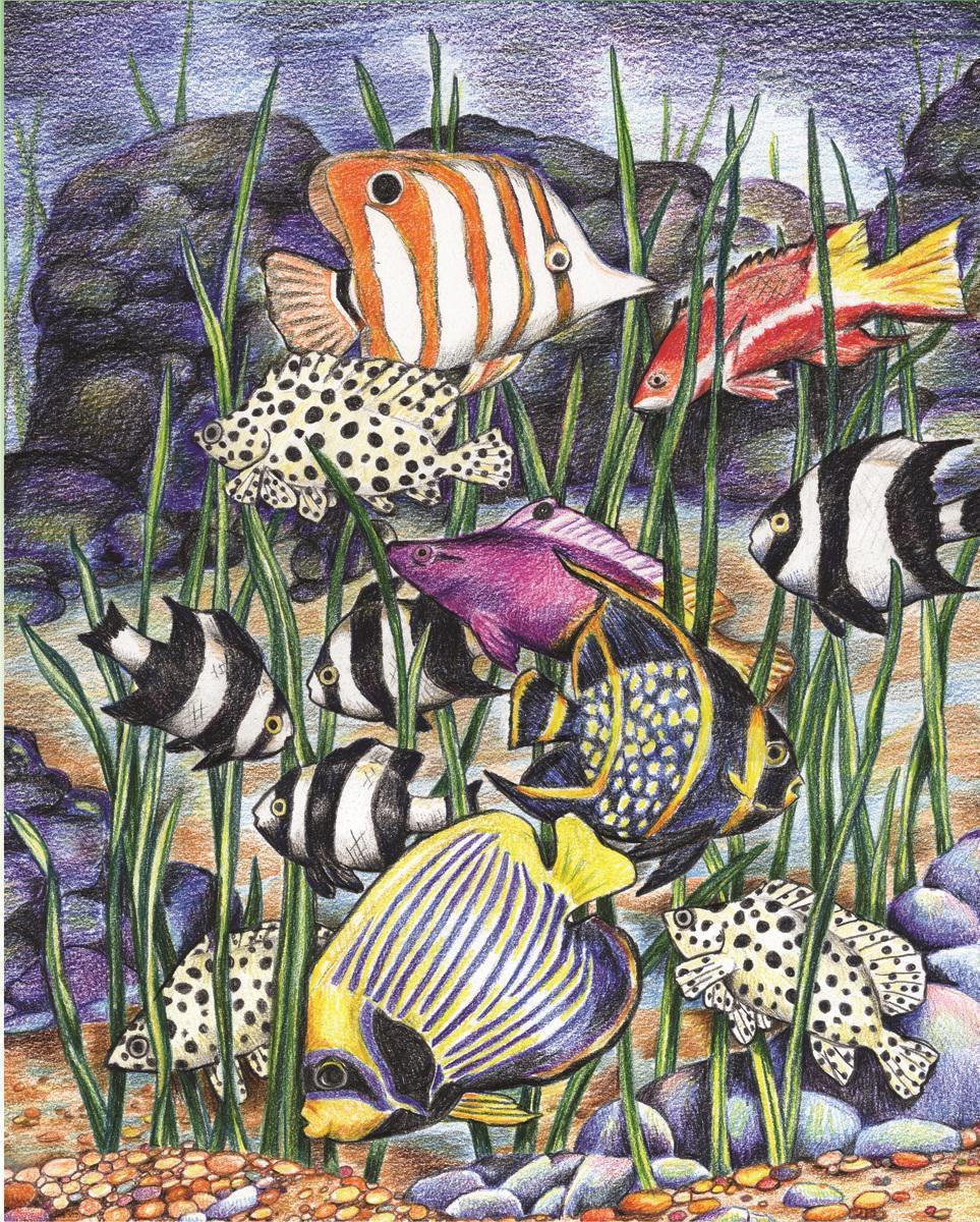 Malen Nach Zahlen Mit Buntstifte Tropische Fische